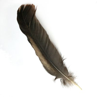 Hen Feather